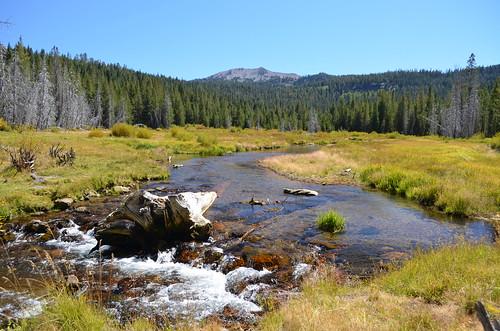 Hat Creek Meadow