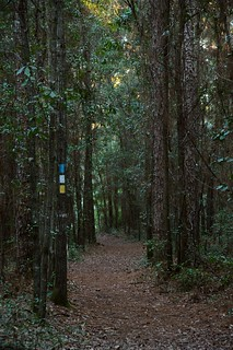 The Hiking Trail | by faungg's photos