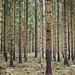 wood by juliasvanqvist