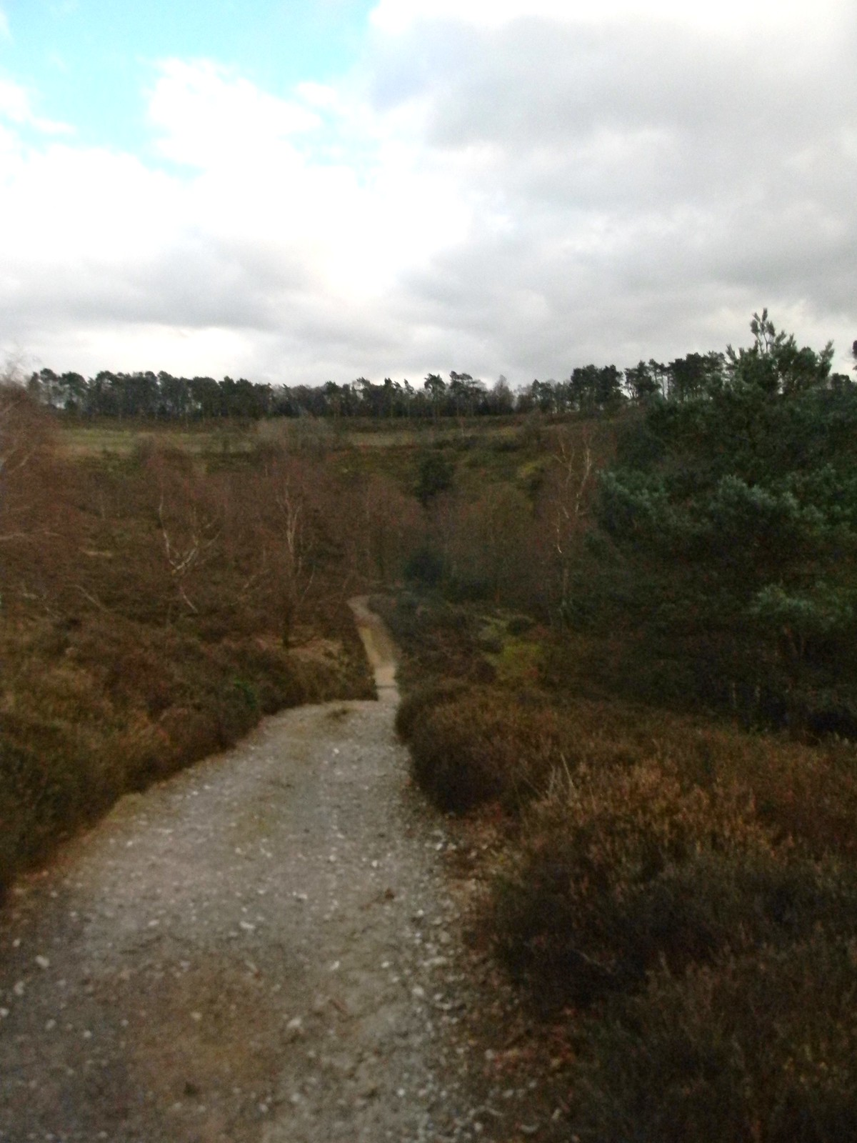 Path though Devil's Punchbowl Milford to Haslemere