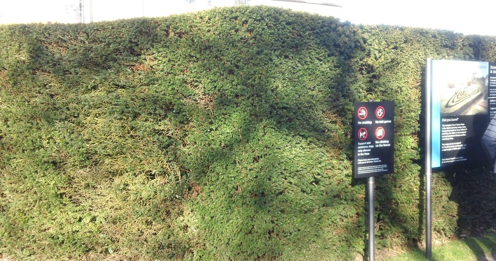 Maze entrance Hampton Court
