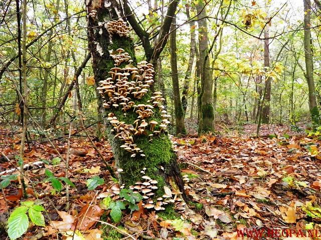 20-10-2012     Wedeblick-   Driebergen        25 Km (97)