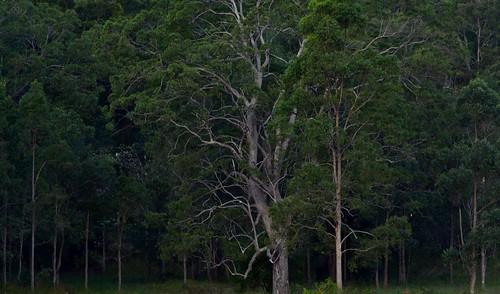 landscape australia nsw australianlandscape bentley northernrivers richmondvalley backcreekvalley