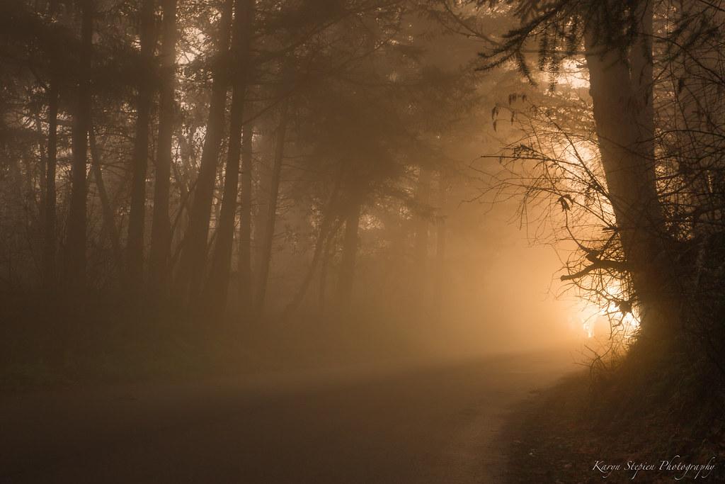 Golden Light Fog   Mt  Douglas Park, Victoria BC It's been p