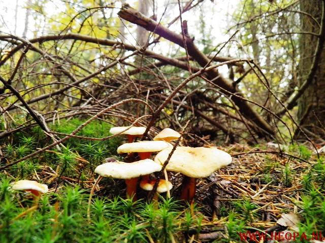 20-10-2012     Wedeblick-   Driebergen        25 Km (52)