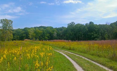 park flowers summer field yellow weeds woods path michigan meadow trail wildflowers stonycreekmetropark oaklandtownship