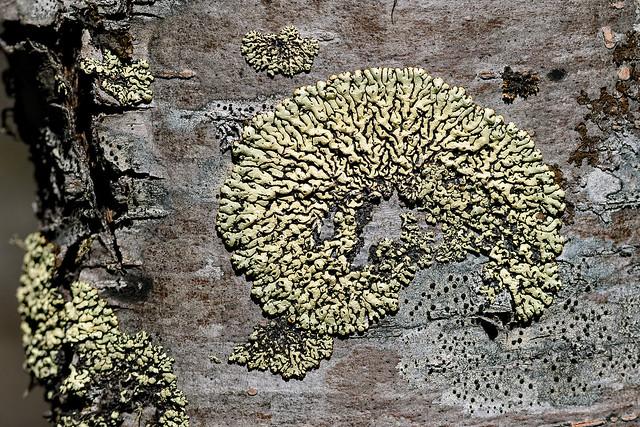 Lichens with Nikon 75-150mm f/3.5 E @ 150mm