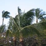 Trees in Maui