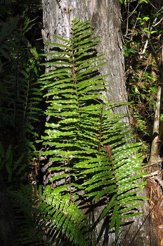 nature outdoors flora florida parks swamp preserves