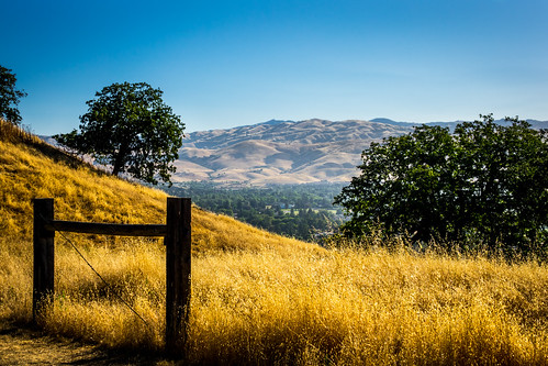 california park ca morning trees summer mountains nature grass us flora unitedstates outdoor hiking sanjose vegetation recreation santacruzmountains dryseason santateresacountypark santaclaracountyparks