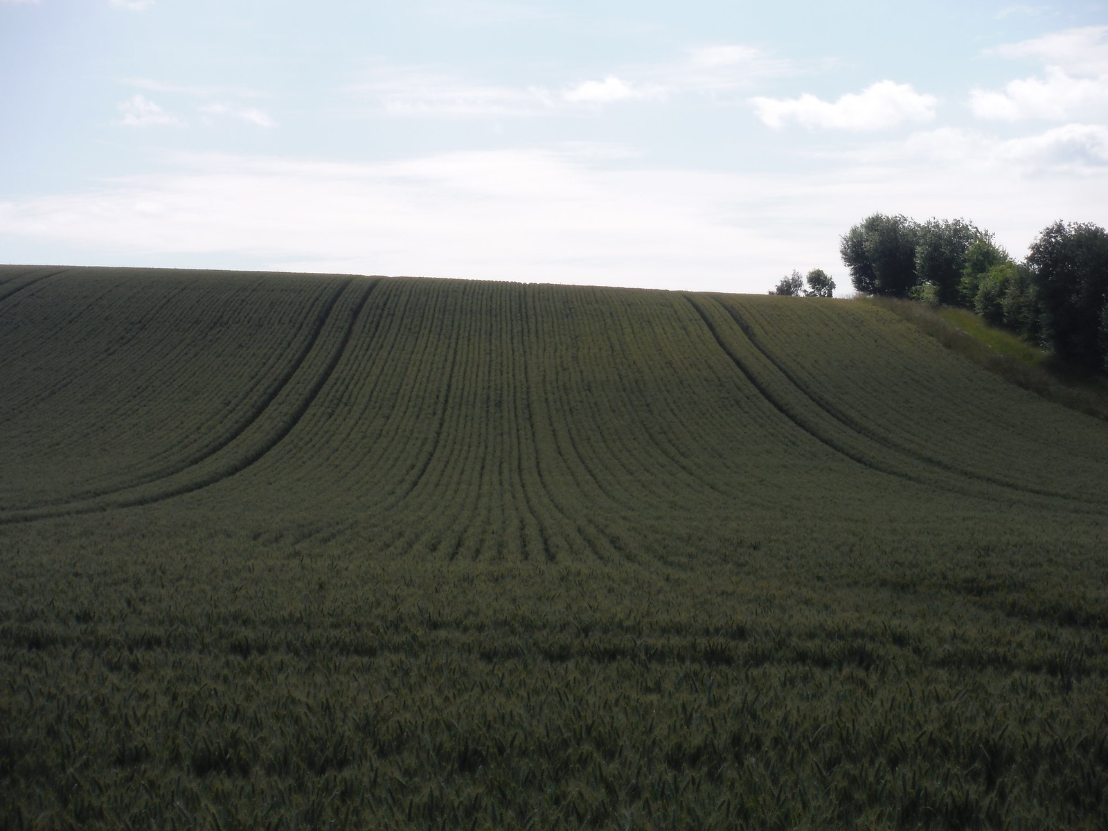 Fieldscape, King's Somborne SWC Walk 265 - Dean to Mottisfont and Dunbridge