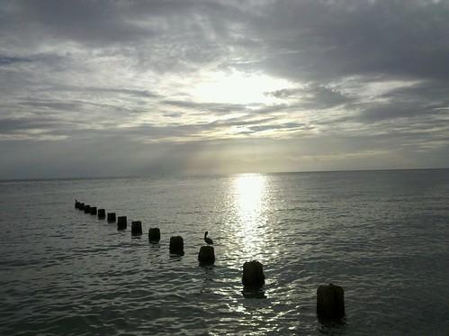 ocean sunset sun bird beach water clouds florida stumps clearwater gumm