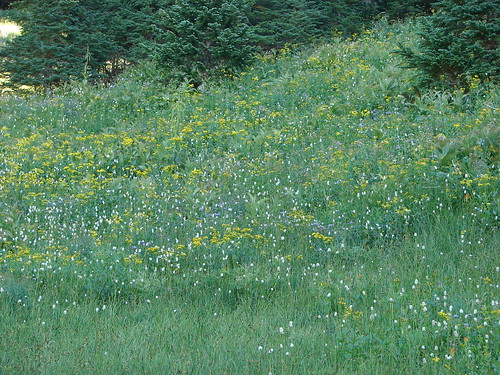 Wildflowers along the Yocum Ridge Trail