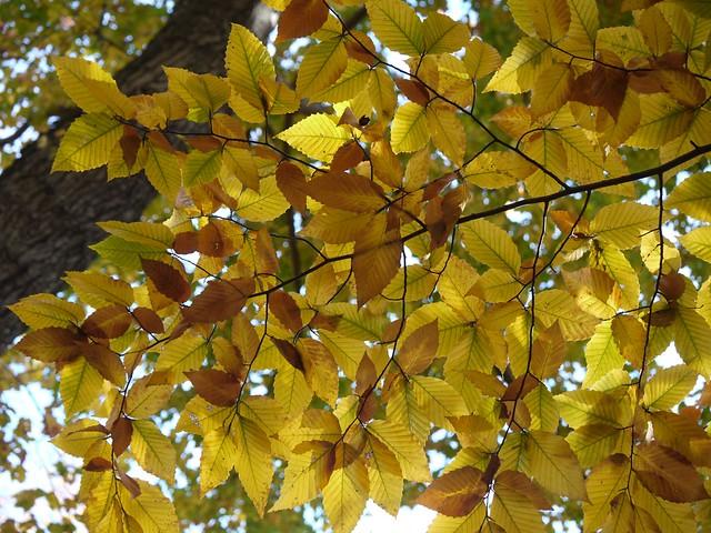 日, 2013-11-03 14:18 - Bronx Botanical Gardenの紅葉