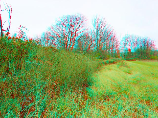 Field In 3D