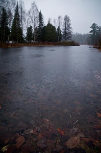 trees lake wet water leaves rain landscape dead