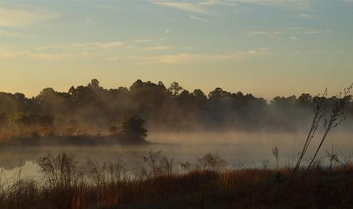 water fog day florida stuart hover halpatiokeeregionalpark