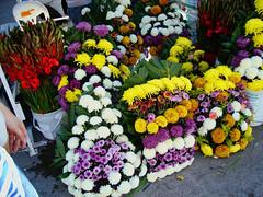 Chrysanths on display