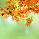 平安神宮神苑の紅葉