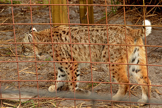 Big Cat Rescue -Kathy 08 | by KathyCat102