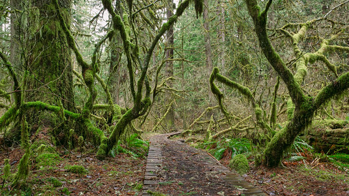 nature path moss trees forest pacificnorthwest leaves mysterious canon green canoneos5dmarkiii canonef2470mmf28lusm johnwestrock