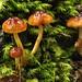 nps fungi wkend 11