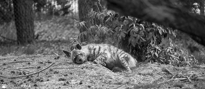 Safaripark Beekse Bergen - 0218