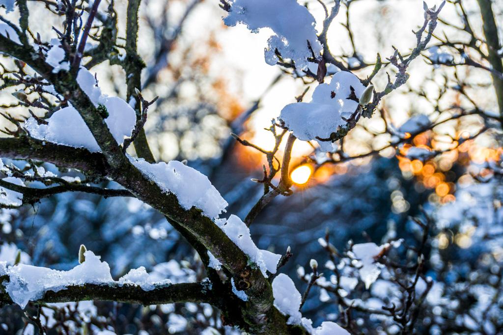 golden winter moment