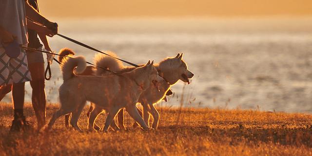 walkin' the dogs . . .