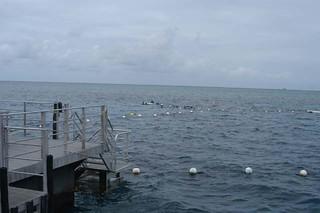 barrier_reef-1-17-03 (25) | by gideonariel1