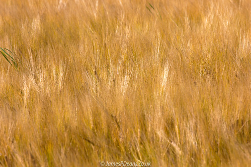 digital downloads for licence gb agriculture unitedkingdom crops man who has everything aberdeenshire britain field cereal fields scotland farm barley europe uk james p deans photography digitaldownloadsforlicence jamespdeansphotography forthemanwhohaseverything