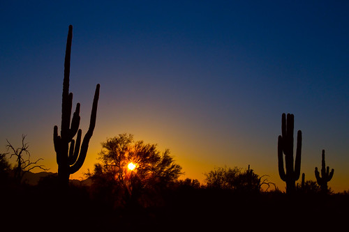 arizona cactus sun nature phoenix beautiful sunrise giant landscapes colorful desert sunsets scottsdale saguaro sonoran mesa tempe jamesboinsogna