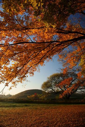 morning autumn japan morninglight saitama 埼玉県 日本の景色 古墳 ruraljapan sakitama 埼玉古墳群 埼玉県の景色