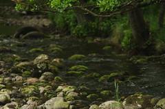 Lochranza stream