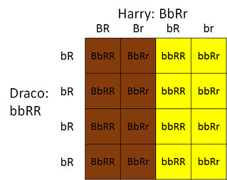 DracoHarry children hair colour punnett square | by draechaeli