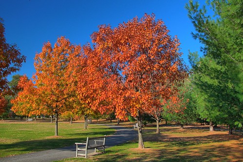 autumn trees canon landscape hdr highdynamicrange crossings colonie canont4i