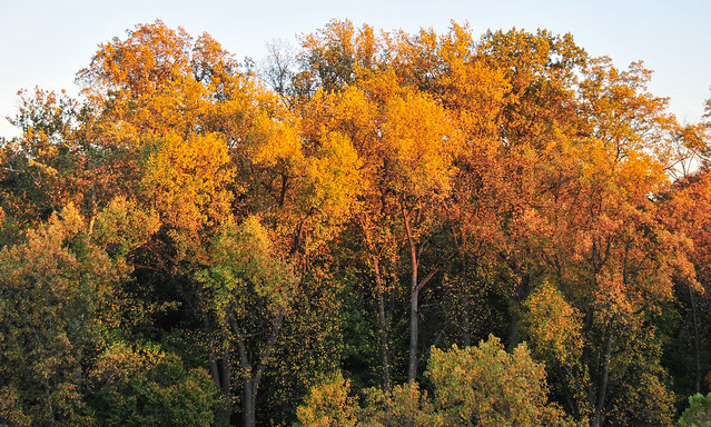 Fall Foliage Magic in Rock Creek Park