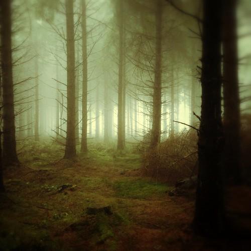 fogtreesforestllandeglaiphoneonlysnapseedwales