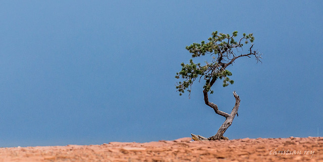 Capitol Reef National Park: The little tree