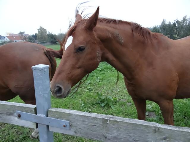 Pferd-2559