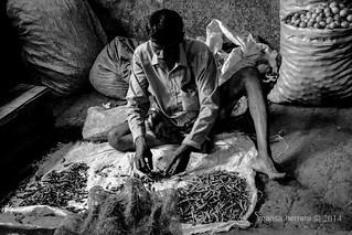 Sri Lanka. Colombo. Leyendo el futuro. Manning market. Colombo.