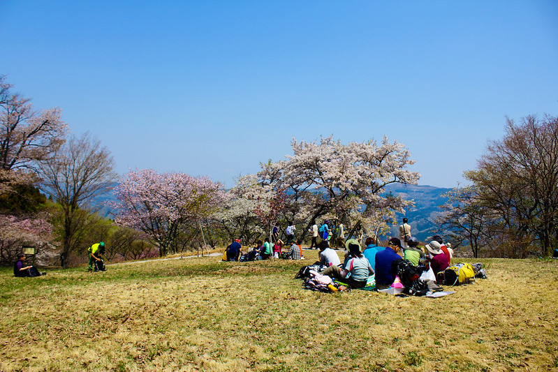 2014-04-19_00255_美の山.jpg