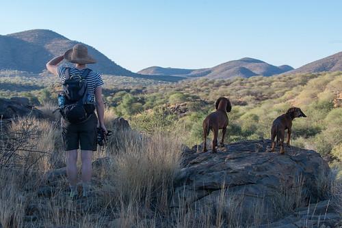 africa dog nature 2016 animal canid namibia canislupusfamiliaris hund windhoek otjozondjupa people