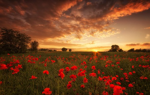 sunset sadness war sundown poppy poppies remembrance worldwar1 centenary battleofthesomme sigma1020mmf4 nikond7000