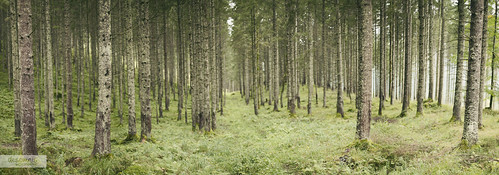 wood trees panorama nature forest landscape 50mm austria landscapes österreich woods dof natural bokeh natur depthoffield photomerge treeline landschaft forestpath steiermark 50mmf14 styria 6d canon50mm canon50mmf14 landscapephotography forestgreen panoramaview canon50mmf14usm canon6d canoneos6d desomnis