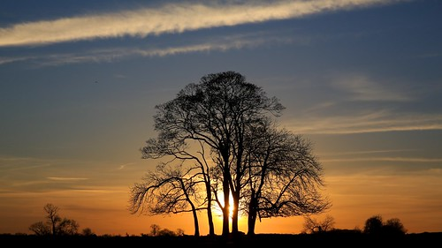trees sunset sky sun alberi tramonto cielo