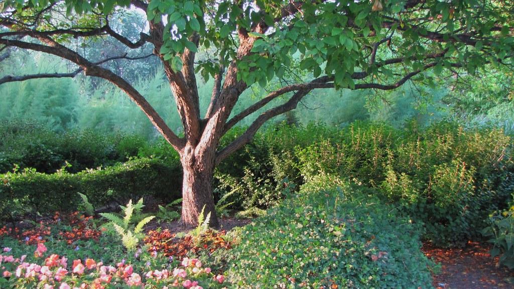The Tree at Cantigny
