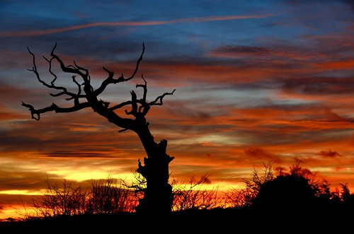 winter sunset tree silhouette solstice today 21014