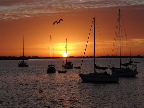 morning bird sunrise boats boat florida sailboats bradentonbeach