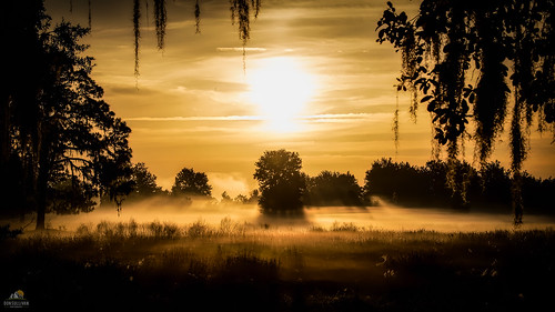 mist silhouette sunrise florida farm